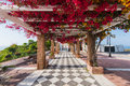 Beautiful flowers on streets in Maro near NErja,Spain Royalty Free Stock Photo