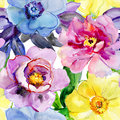 Beautiful flowers, watercolor illustration. Royalty Free Stock Photo