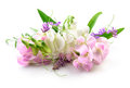 Beautiful Flowers on white background. Floral design Royalty Free Stock Photo
