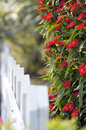 Beautiful flowers beside white wooden fence Stock Image