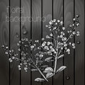 Beautiful flowers on a wooden texture black white Royalty Free Stock Photos