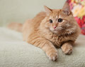 Mullido gato en sofá