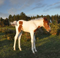 Beautiful Foal in the New Forest Royalty Free Stock Photo