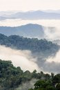 Beautiful fog in tropical forest. Royalty Free Stock Photography