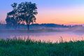 Beautiful foggy dawn over the Narew river. Royalty Free Stock Photo