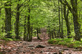 Beautiful footpath green deciduous forest spring located vosges mountains eastern part france Stock Photography