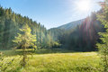 Beautiful forest lake in the mountains Royalty Free Stock Photo