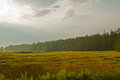 Beautiful forest and meadow landscape sunrise Royalty Free Stock Photo