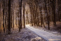 Beautiful forest in winter with snow and sunlight Royalty Free Stock Image