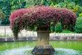 Beautiful fountain inl Botanical Garden, Kandy, Sri Lanka Royalty Free Stock Photo