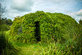 Beautiful framework covered by vegetation close-up photo Royalty Free Stock Photo