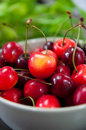 Beautiful fresh cherries from an eco friendly farm Stock Image