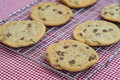 Beautiful fresh hand made chocolate chip cookies tasty home cokies Stock Photography