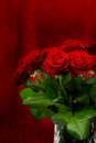 Beautiful fresh red roses bouquet Royalty Free Stock Photos