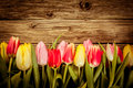 Beautiful Fresh Tulip Border O...