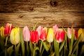Beautiful Fresh Tulip Border O...