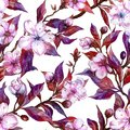 Beautiful fruit tree twigs in bloom on white background. Pink flowers and red and purple leaves. Spring seamless floral pattern.