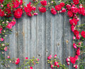 Beautiful garden red roses on weathered wood retro styled textured background. Romantic floral frame background. Royalty Free Stock Photo