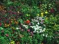 Beautiful Garden View Stock Photos