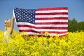 A beautiful girl with american flag in yellow field Royalty Free Stock Photo