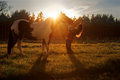 Beautiful girl and horse at sunset a slim pretty young woman leans back as looks her black white as the sun sets behind lighting Royalty Free Stock Images