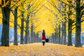 Beautiful Girl with Yellow Leaves in Nami Island, Korea. Royalty Free Stock Photo
