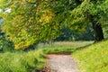 Beautiful golden autumn time in a park near copenhagen Stock Image