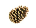 Beautiful golden pine cone isolated on white Stock Image
