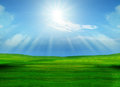 Beautiful grass field and sun shining on blue sky use for pure natural background Royalty Free Stock Images