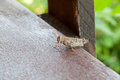The beautiful grasshopper sits on a board