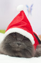 Beautiful gray cat with a santa suit christmas clothes portrait Stock Photo