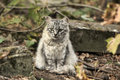 Beautiful gray fluffy cat in nature Stock Photos