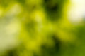 Beautiful green bokeh abstract blur in sunny day Stock Images