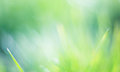 Beautiful Green Bokeh Background