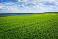 Beautiful green field and clouds Stock Images