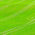 Beautiful green field pattern grass Stock Image