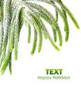 Beautiful green fir border Stock Image