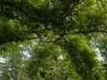 Beautiful green garden pergola Royalty Free Stock Photo