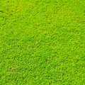 Beautiful green grass Royalty Free Stock Photos
