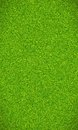 Beautiful green grass texture Royalty Free Stock Photo