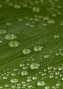 Beautiful green leaf with drops of water Stock Photography