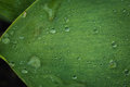 Beautiful green leaf with drops of water, leaf with water drops Royalty Free Stock Photo