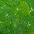 Beautiful green leaf with drops of water. Nature Royalty Free Stock Photo