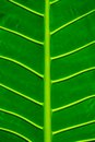 Beautiful green leaf texture background Stock Images