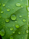 Beautiful green leaf texture with drops of water Royalty Free Stock Photo