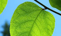 Beautiful green leaf with waterdrops Royalty Free Stock Photo