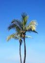 A beautiful green palm tree on a sky background