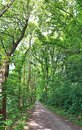 Beautiful green panorama landscape of a green forest on northern europe Royalty Free Stock Photo