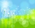 Beautiful green spring meadow