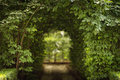 Beautiful green tunel with light in background and rocks alley Royalty Free Stock Photo